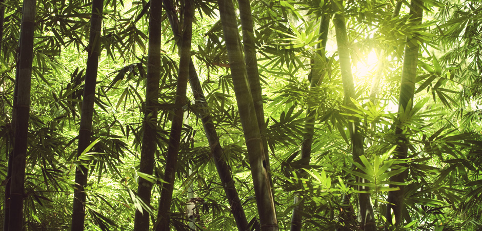 The Bamboo Industry and the Environment
